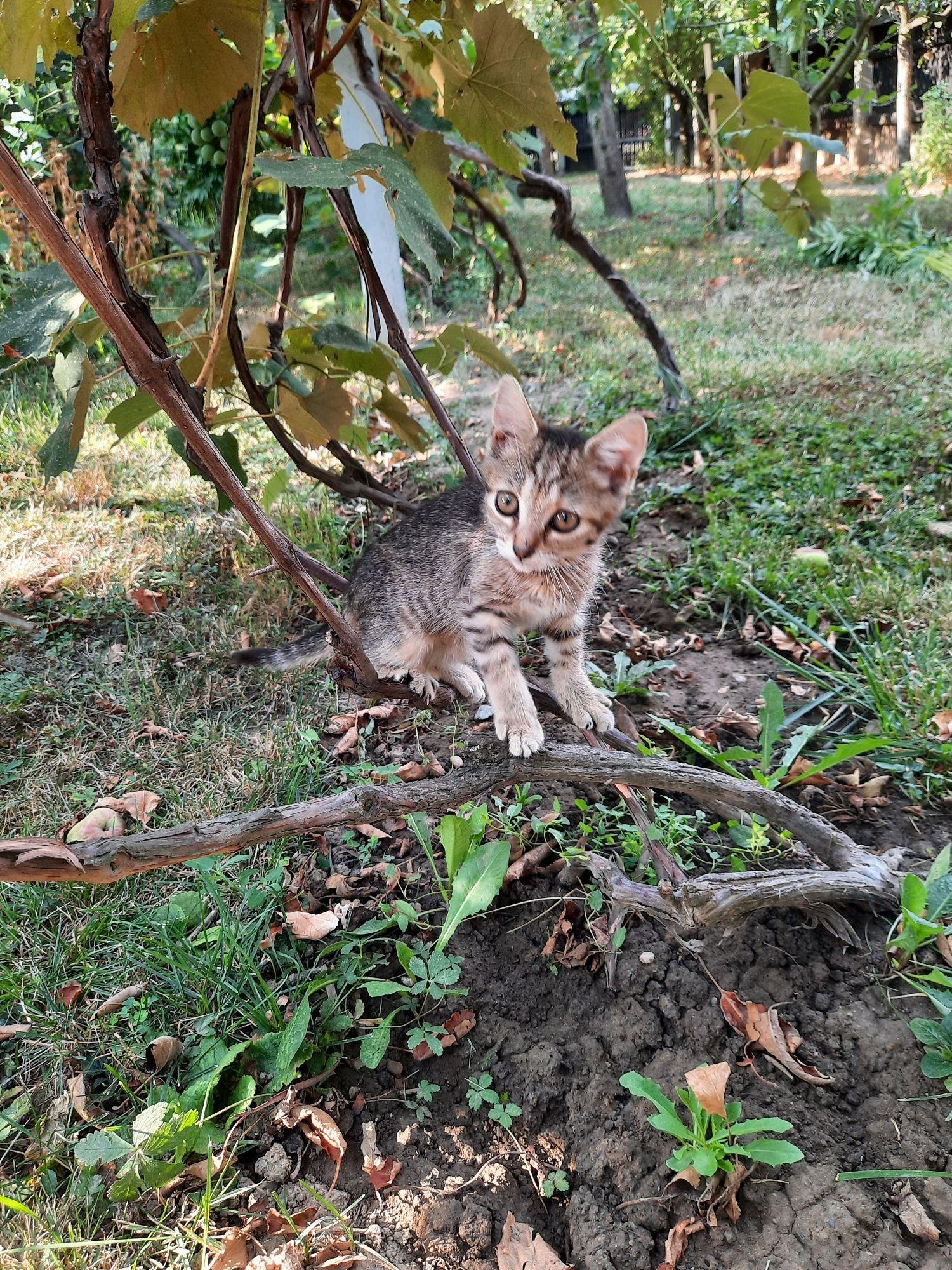 Pisică deparazitată