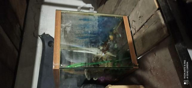 аквариум с водорослями,песком,
