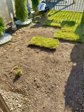Газон готовый продажа установка укладка посев семенами клевер