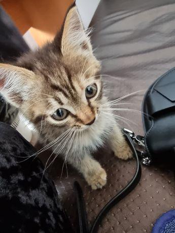 Отдам котёнка бесплатно с доставкой на дом