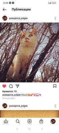 Пропал кот на новой Узенке