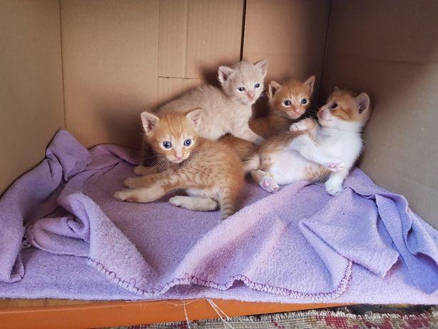 Puiuti de pisica