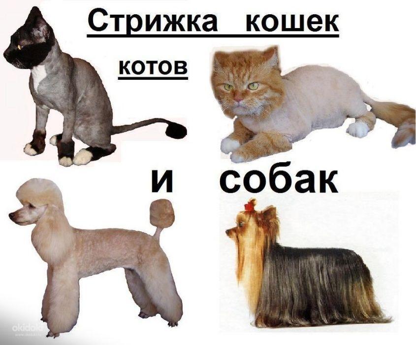 Стрижка кошек и собак с выездом