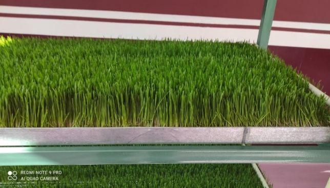 зелённый корм