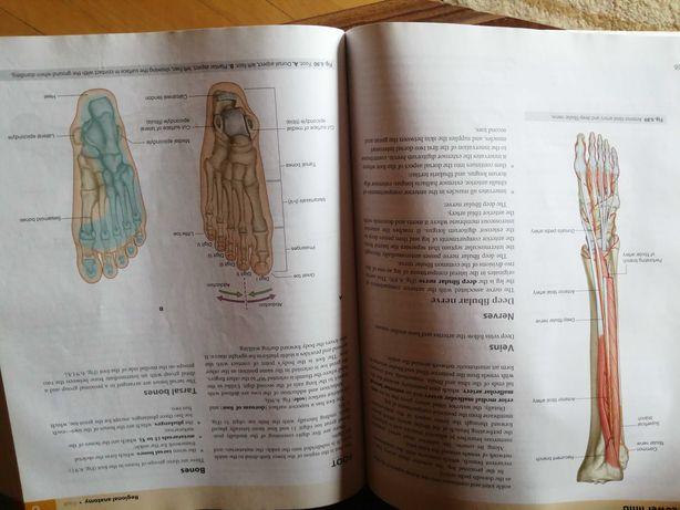 Carte de anatomie, engleza