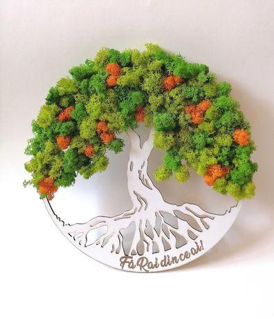 Copaci cu licheni stabilizati
