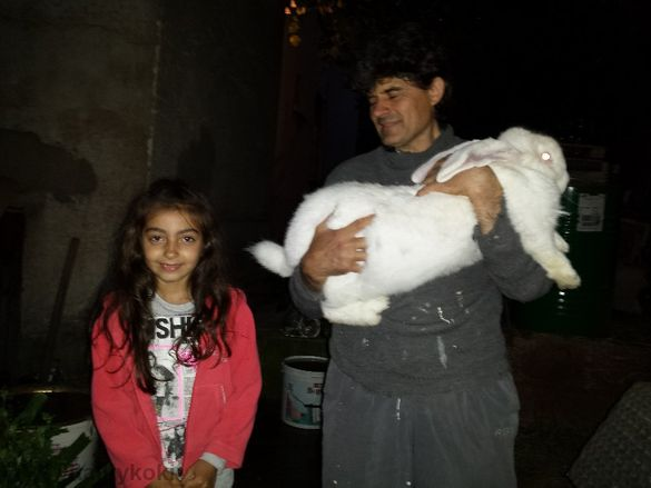 Продавам зайци: Белгийски великан, Бял великан, Пеперуда