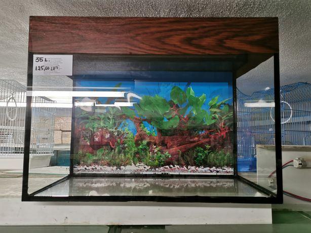 Vând acvarii