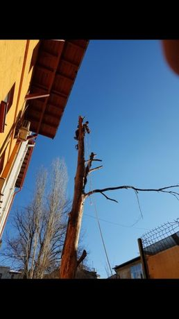 taieri copaci pomi periculosi alpinism utilitar lucrari la inaltime