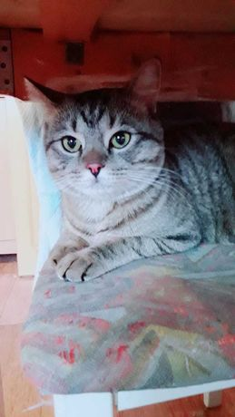 Кострированный Кот