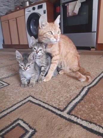 Отдам хорошеньких котят и кошку
