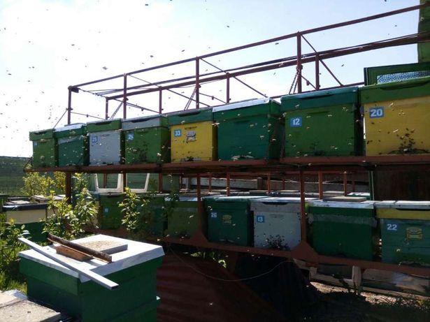 pavilion apicol descoperit
