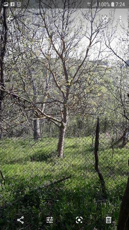 Празно дворно място в Еленския балкан в регулация