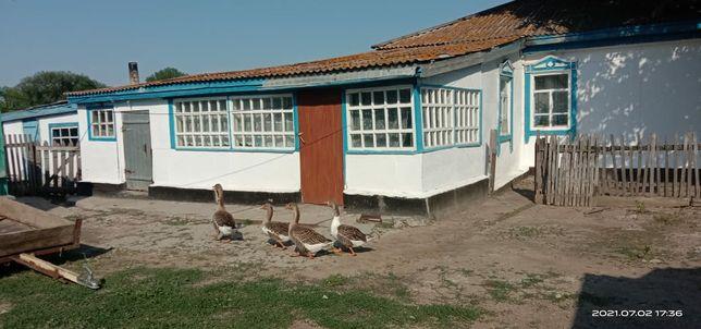 Продам 3х комнатный дом, остаётся частичная мебель и домашние птицы