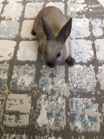 Продам карликового кролика