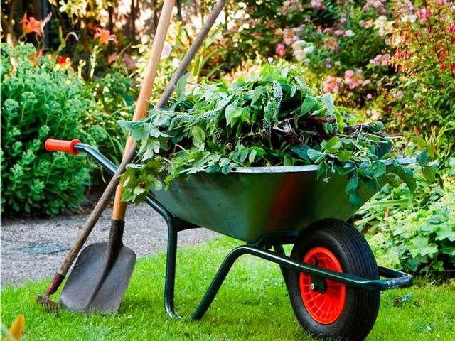 Почистване на дворове,косене на трева,рязане на дървета ВеликоТърново гр. Велико Търново - image 1