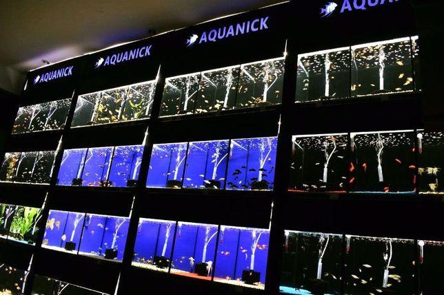 Pesti de acvariu Aquanick