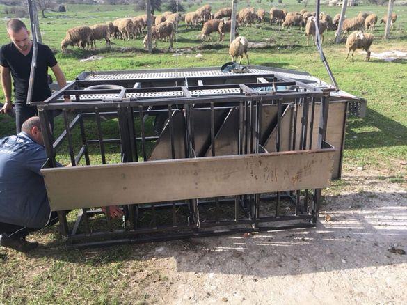 Платформа за доене на овци с агрегат