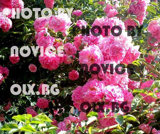 Японски рози, двуцветни рози, топ карамфил, маргаритки, флокс, трева