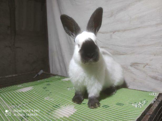 Продам:кролики разных пород