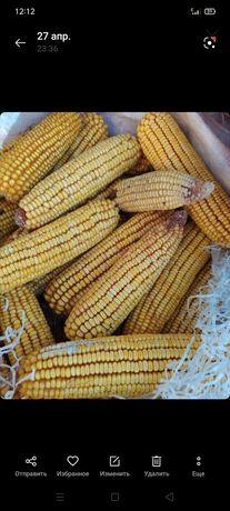 Кукуруза в бручатках