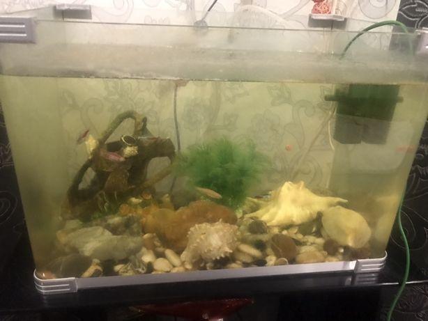 Аквариум с рыбками и полкой