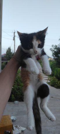 Котята в добрые руки! Бесплатно