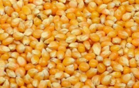 Vand tărâțe, grâu, baloti, cartofi, seminte de floarea soarelui