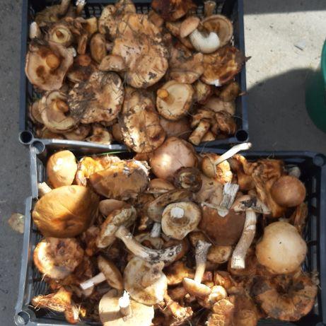 Продам грибы подосиновики