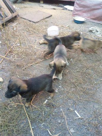 Дарим щенков в добрые руки