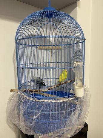 Продам попугаев и клетку