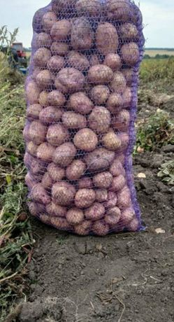 Продаю картошку оптом