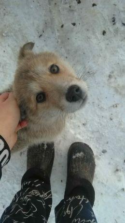 Помогите пристроить бездомную собачку