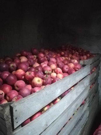Vând mere și pere