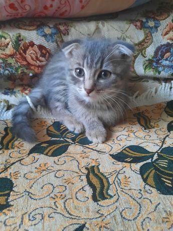 Котята ,2 месяца.Мальчик и девочка.Город Экибастуз