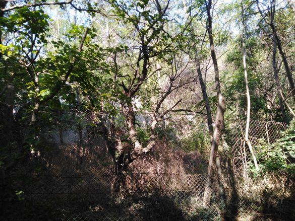 Почистване на парцели,дворове,косене на трева,рязане на дървета Варна