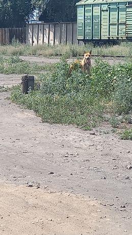 Отдам даром Прошу помочь найти хозяина собаки  помогите пожалуйста.