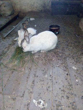 Кролики большие и маленькие