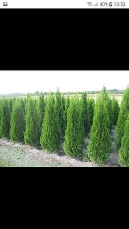 plante ornamentale preț producator