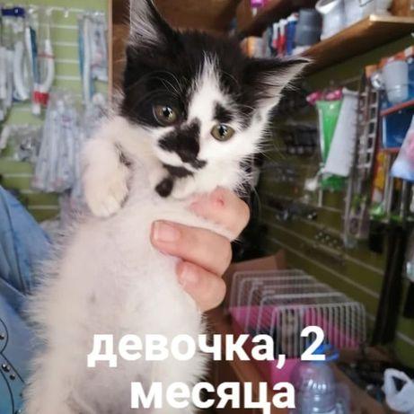 Ищем дом! Котята (мальчики и девочки), возраст 2-3 месяца.