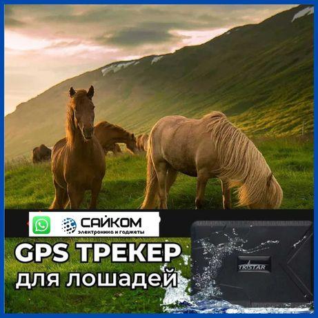 Жылқыға ЖПС /GPS для Лошадей/Настройка+Ошейник Доставка в Атырау.