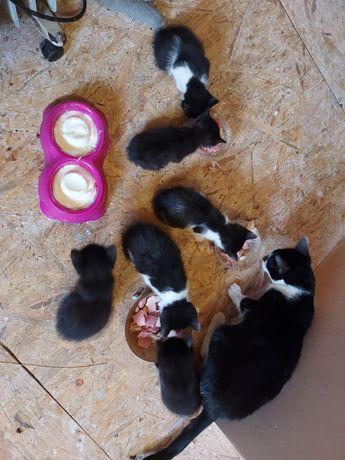 Pisicuțe spre adopție