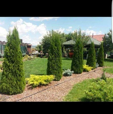 Amenajări grădinii și spații verzi,plante ornamentale,prețurii minime