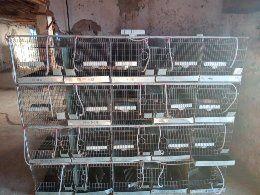 Cuști sinsila preț 120 lei