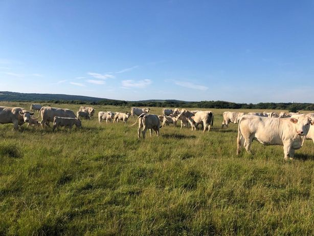 Gunoi de vaci Bio cu certificat EcoCert