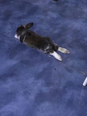 Отдам бесплатно кролика