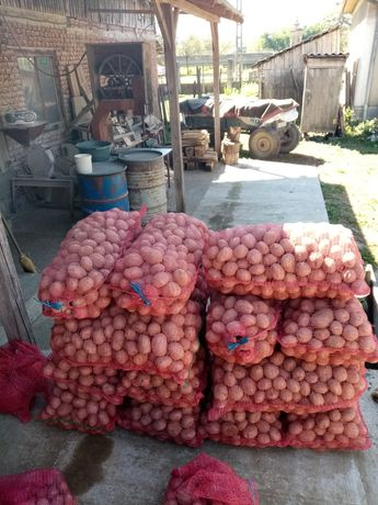 Vând cartofi roșii cu miez galben