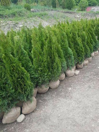 Plante ornamentale grădina ideală