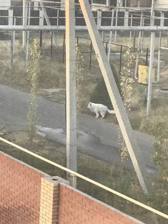 Собака бездомная. Вероятно породистая.
