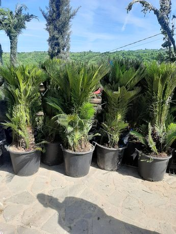 Plante ornamentale și specii de plante